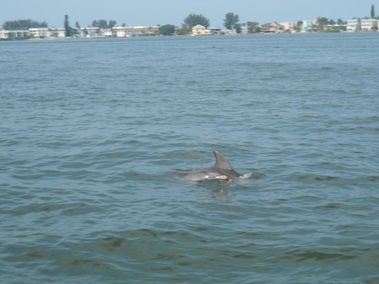 Paradise Boat Tours: Dolphin mama and her calf.  They let us hang with the dolphins all we wanted!