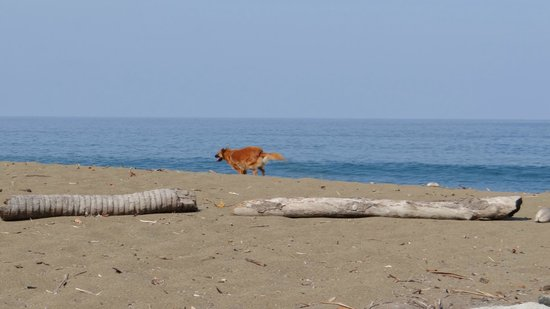 Guaria de Osa Ecolodge: Our Beach Companion