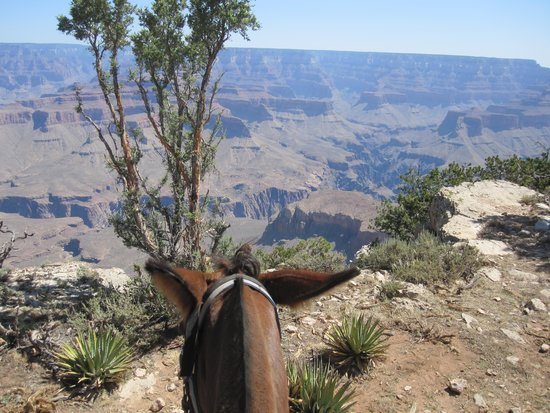 Grand Canyon Mule Tours by Xanterra: Great Views!