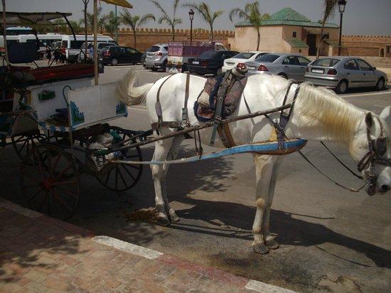 Médina de Meknès : Meknes - horse carriage