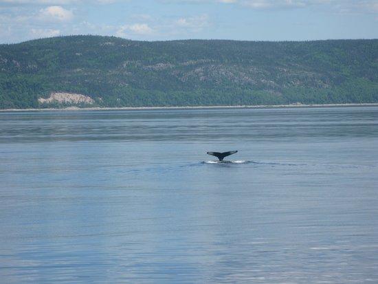 Hotel Tadoussac : A whale tale