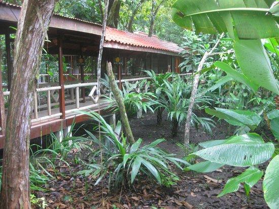 Pachira Lodge: Camino hacia las habitaciones
