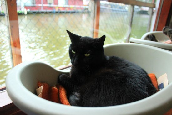 De Poezenboot: Kitty
