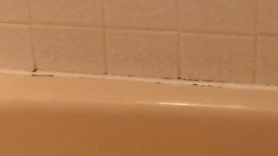 Quality Inn & Suites: Mold in the shower