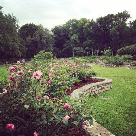 Pond Picture of Zilker Botanical Garden Austin