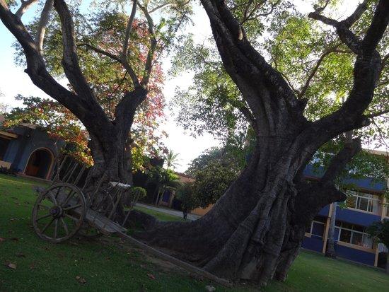 Hotel Calli: Jardim em frente ao restaurante do hotel