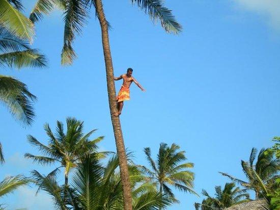 Hilton Hawaiian Village Waikiki Beach Resort: Climbing Palm Trees