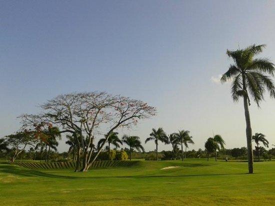 Barcelo Bavaro Palace: Vista campo de golfe
