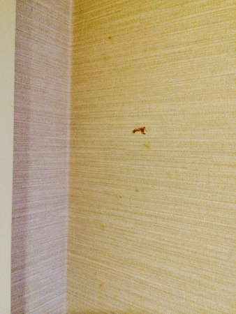 The Westin Bellevue: Rooms were NOT clean!  Stuff on walls, in tub, desks had dust on them.  Very disappointing!
