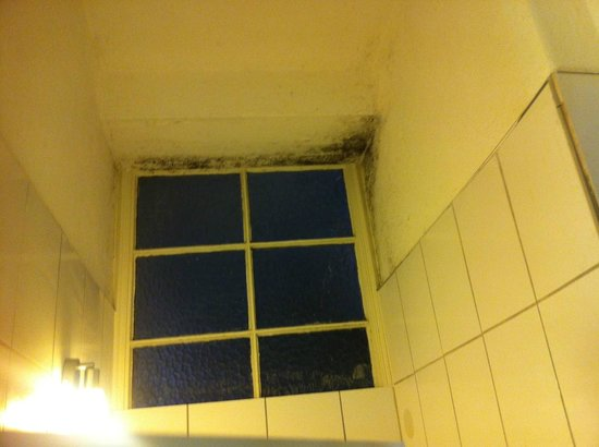 Am Roonplatz: Mold covers the bathroom ceiling