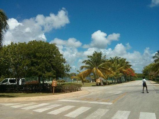 Sirenis Punta Cana Resort Casino & Aquagames : Espace vert