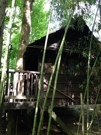 Mountain Light Sanctuary : treehouse