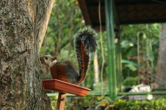 Hotel Mar de Luz: Wildlife in the Courtyard