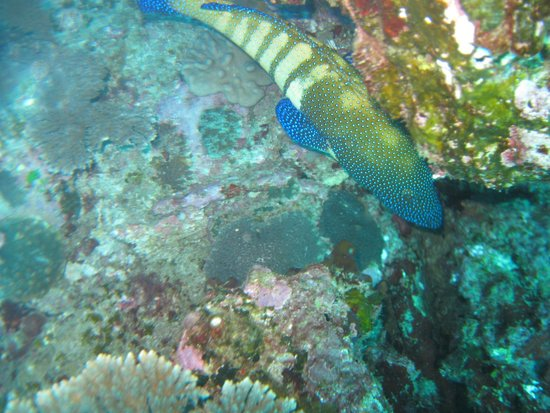 Sodwana Bay: Lots of pretty fish