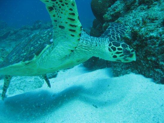 Sodwana Bay: Sea Turtle