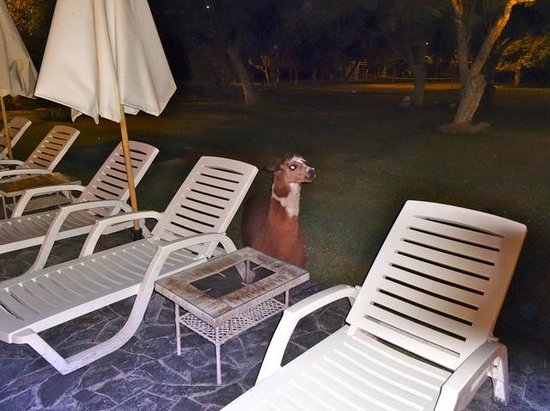 Hotel Majoro: alpaga le soir