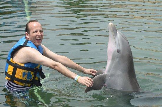 Dolphin Discovery Puerto Aventuras: Una gran experiencia