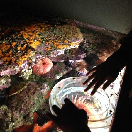 Monterey Bay Aquarium : Close-up at the tide pool