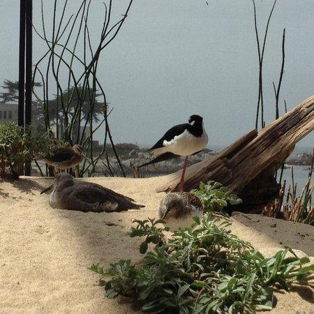 Monterey Bay Aquarium : Birds too!