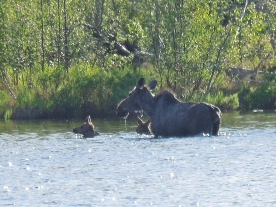 Mangy Moose Motel: Momma Moose and twins