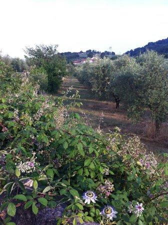 Agriturismo Villani Poderi Nesti & Cupoli: Poderi Nesti & Cupoli
