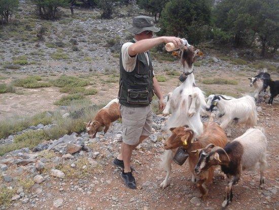 Safari Club Crete: Sam & the goats!