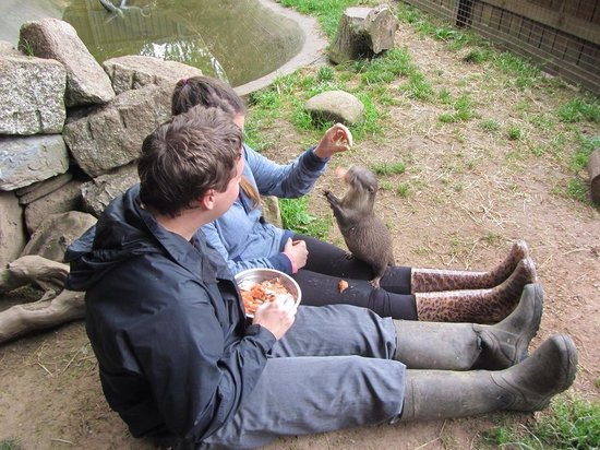 Buckfast Butterfly Farm and Dartmoor Otter Sanctuary: Otter experience