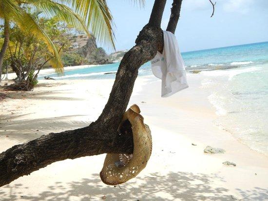 Grenadian by Rex Resorts : Taking a dip!