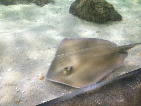 The Florida Aquarium: 9