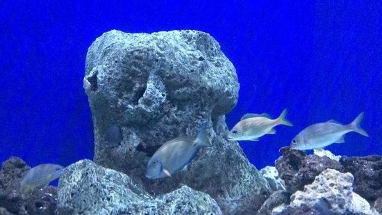 The Florida Aquarium: 3