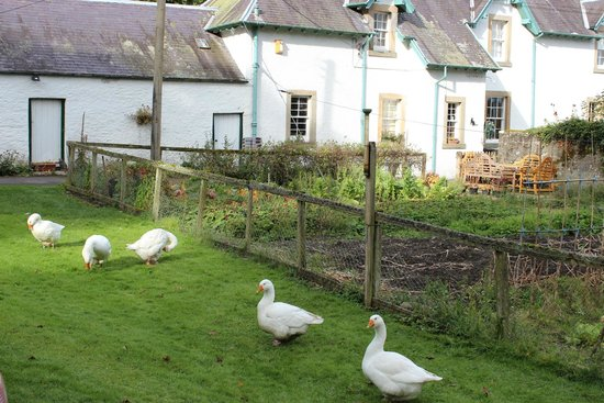 Wiltonburn Farm : This B&B's farm authenticity made me want to stay so much longer
