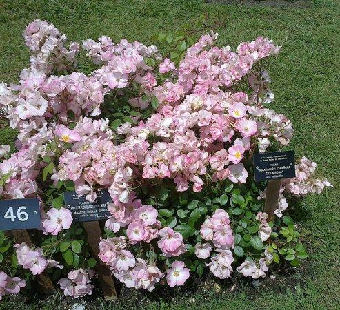 Jardin de Rosas de Cervantes