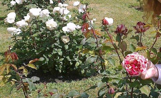 Un d a soleado y feliz con las mejores rosas de nuestro for Cancion jardin de rosas