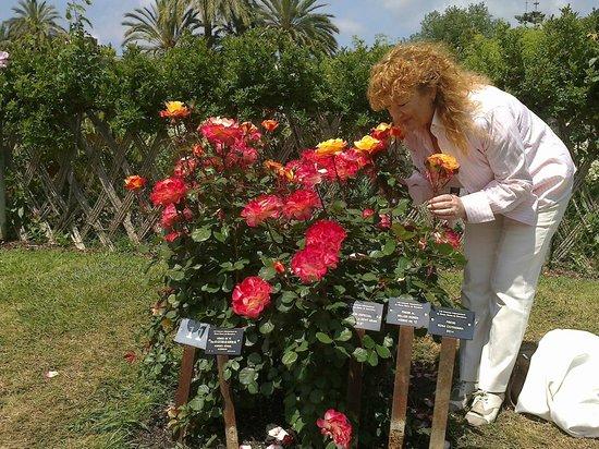 Un d a soleado y feliz con las mejores rosas de nuestro - Jardines con rosas ...