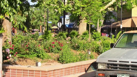 Downtown Grand Junction : Landscaping on Main Street