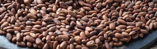 Agouti Cacao Farm: Roasted Cacao Beans