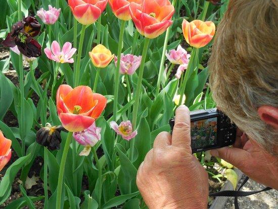 Whitnall Park: capturing my husband capturing the flowers