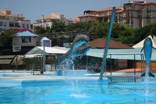 The Kingfisher Club: selwo dolphinarium