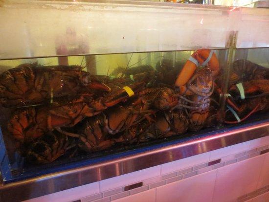 Geddys : lobster tank