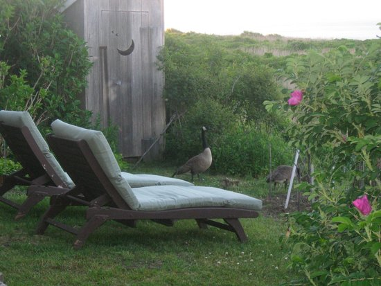 The Sea Breeze: yard in front of our porch