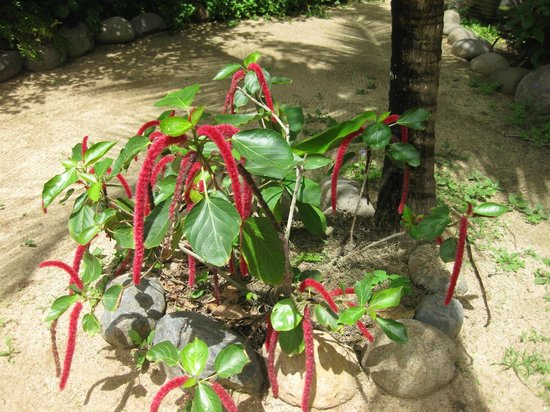 Casa Viva Troncones: beautiful plants on the grounds