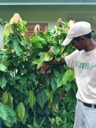 Belcampo Lodge : Elroy explains the different types of coffee plants growing at the Belcampo Farm Center.