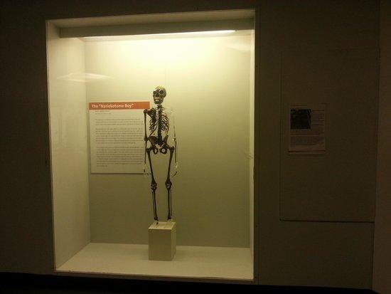 World Museum: Skeleton 1