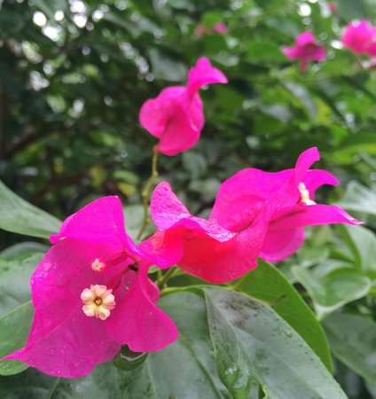 Copal Tree Lodge, a Muy'Ono Resort: More tropical flowers along the Belcampo Lodge pathways.