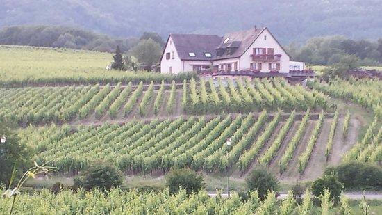 Le Maximilien: Wonderful vineyard view
