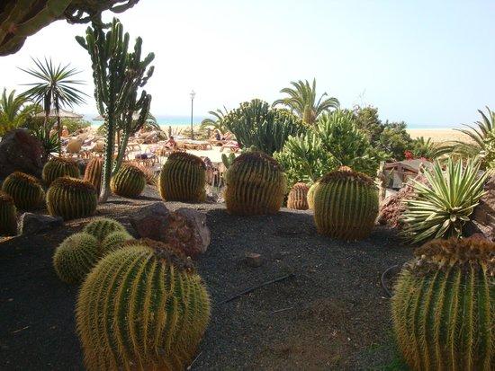 Melia Gorriones Fuerteventura : Hotelanlage