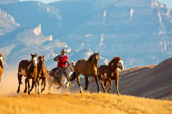 The Hideout Lodge & Guest Ranch: Bringing in the horses