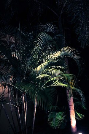 Villa Tanamera : Resort garden by night