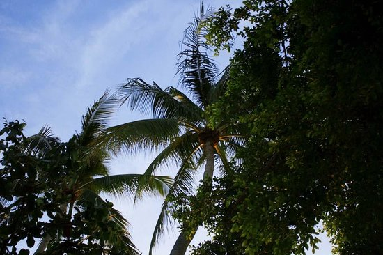 Villa Tanamera : Palms on the beach