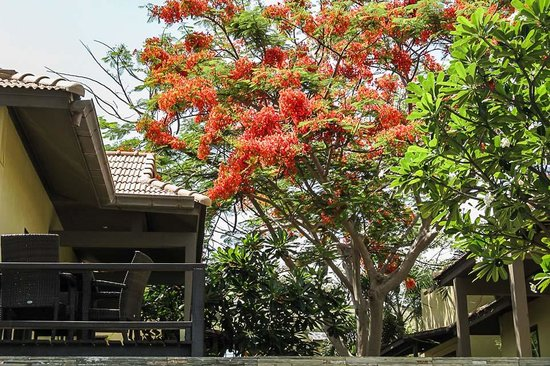 Villa Tanamera : Garden